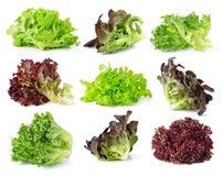 свежий салат листьев Стоковые Фото