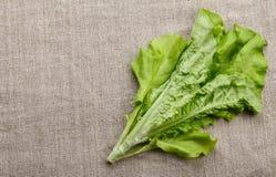 Свежий салат лист весны Стоковое Изображение RF