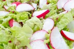 Свежий салат редиски и салата Стоковые Фотографии RF