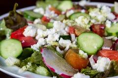 свежий салат сада стоковое изображение