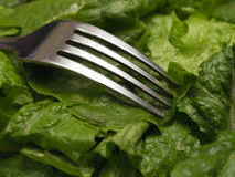 Свежий салат с вилкой Стоковое фото RF