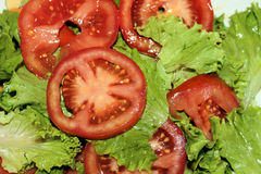 Свежий салат с томатами на плите Стоковые Изображения RF