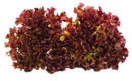 свежий салат Стоковое Изображение