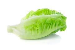 Свежий салат cos младенца Стоковые Изображения