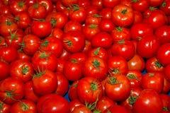 Свежий сбор очень вкусных томатов Стоковое Изображение