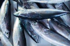 Свежий серебряный тропический вылов рыбы на таблице рыбного базара Океанские рыбы для кашевара обеда Стоковое Изображение RF