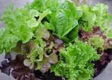 Свежий смешанный зеленый и фиолетовый конец салата вверх Стоковое Фото