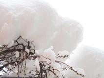 Свежий снег на catkin Стоковые Фото