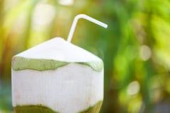Свежий сок кокоса выпивая молодой плод кокоса на предпосылке зеленого цвета природы лета стоковое изображение