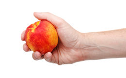 Свежий сочный вкусный красный и желтый персик в человеческой изолированной руке Стоковая Фотография