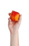 Свежий сочный вкусный красный и желтый персик в человеческой изолированной руке Стоковое фото RF