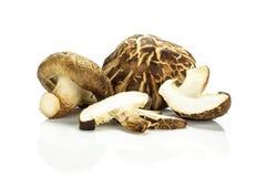 Свежий сырцовый гриб шиитаке изолированный на белизне Стоковая Фотография