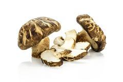 Свежий сырцовый гриб шиитаке изолированный на белизне Стоковая Фотография RF