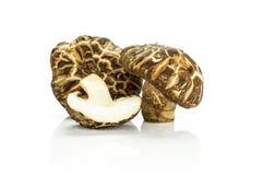 Свежий сырцовый гриб шиитаке изолированный на белизне Стоковое Фото
