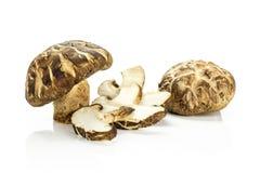 Свежий сырцовый гриб шиитаке изолированный на белизне Стоковое Изображение