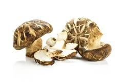 Свежий сырцовый гриб шиитаке изолированный на белизне Стоковые Изображения