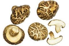 Свежий сырцовый гриб шиитаке изолированный на белизне Стоковое фото RF
