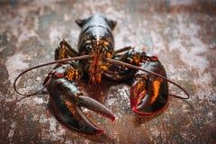 Свежий сырцовый омар Стоковое Фото