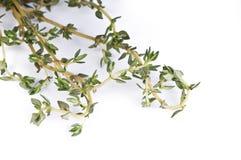 свежий тимиан листьев Стоковые Изображения RF