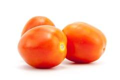 Свежий томат Стоковая Фотография RF