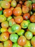 свежий томат Стоковое Фото