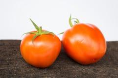 свежий томат Стоковые Изображения