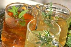 свежий травяной чай трав Стоковое Изображение RF