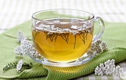 свежий травяной чай стоковая фотография
