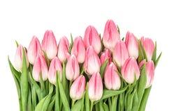 Свежий тюльпан весны цветет цветеня пинка букета Стоковые Изображения RF