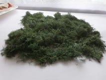 Свежий укроп выбрал от сада и высушил в органической ферме стоковые фотографии rf