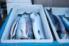 Свежий уловленный тунец готовый для покупателей Стоковая Фотография RF