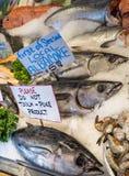 Свежий уловленный тунец Стоковое Фото