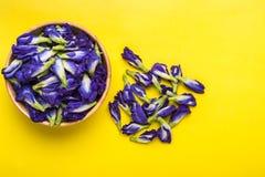 Свежий фиолетовый цветок гороха бабочки на желтой предпосылке еда или Стоковое Изображение