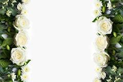 Свежий цветок белой розы на белой предпосылке Стоковые Фото