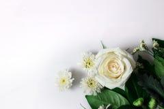 Свежий цветок белой розы на белой предпосылке Стоковая Фотография RF