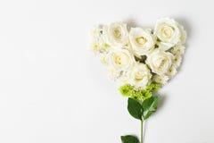 Свежий цветок белой розы на белой предпосылке Стоковое фото RF