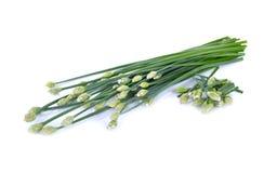 Свежий цветок chives на белой предпосылке Стоковые Фото
