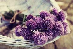Свежий цветок chives Стоковые Фото