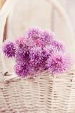 Свежий цветок chives Стоковые Изображения RF