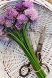 Свежий цветок chives стоковые фотографии rf