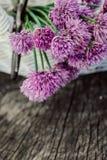 Свежий цветок chives стоковое фото rf