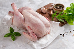 Свежий цыпленок с специями стоковое фото