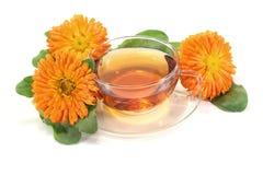 свежий чай ноготк Стоковые Фото