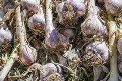 Свежий чеснок в рынке Стоковое Изображение RF