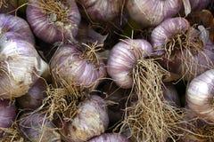 Свежий чеснок на рынке фермеров Стоковое Изображение