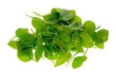 свежий шпинат листьев Стоковая Фотография RF