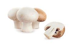 Свежий champignon гриба на белой предпосылке Стоковые Изображения