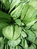Свежий kale стоковое фото rf
