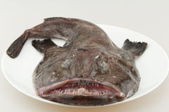 свежий monkfish весь Стоковое Фото