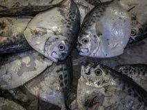 Свежий Moonfish на льде в азиатском рынке стоковые фото
